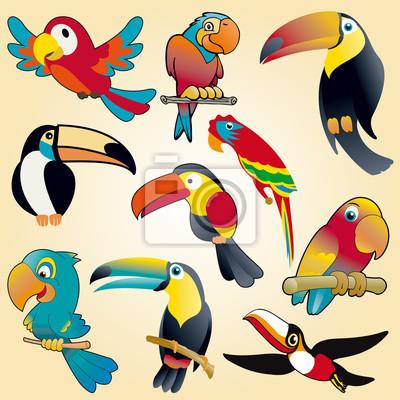 loros y tucanes colección de vectores