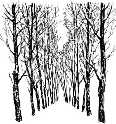 Póster Los árboles en el parque de invierno