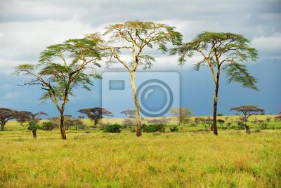 Los árboles están de pie en la sabana después de la lluvia