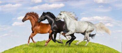 Póster Los caballos corren al galope en los pastizales verdes contra el hermoso cielo
