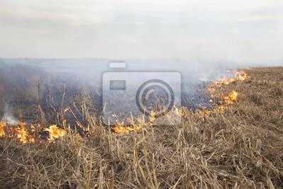 Los cultivos de campo en llamas