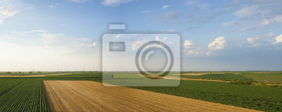Los cultivos de verano panorama con campos de soja, trigo y maíz.