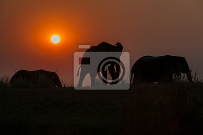 Los elefantes de la tarde