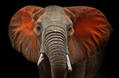 Los elefantes de Tsavo
