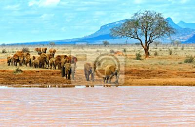 Los elefantes de Tsavo Este