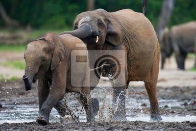 Los elefantes del bosque jugando entre sí. Jungle.