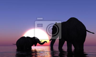 Los elefantes en el mar.