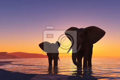 Los elefantes en la playa.