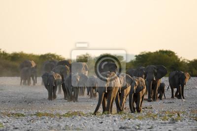 Los elefantes que entran en un agujero de agua.