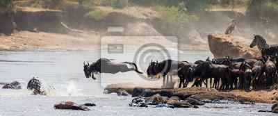 Los Wildebeests cruzan el río Mara. Gran migración. Kenia. Tanzania. Parque Nacional Masai Mara. Una excelente ilustración.