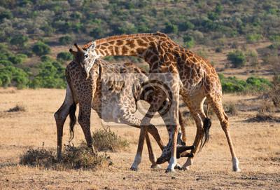 Lucha contra las jirafas