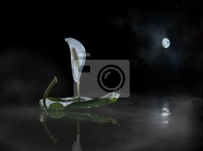 luna brisa