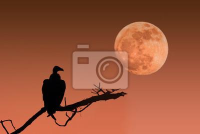 Lune et vautour