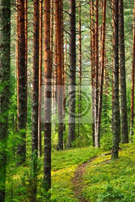 Madera de pino de hadas