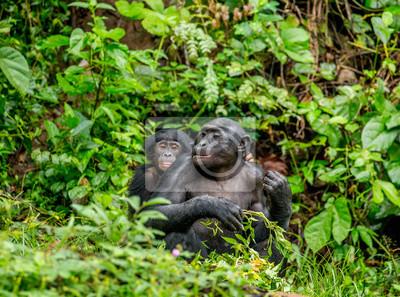 Madre de Bonobo con un bebé en un fondo de un bosque tropical. República Democrática del Congo. África.