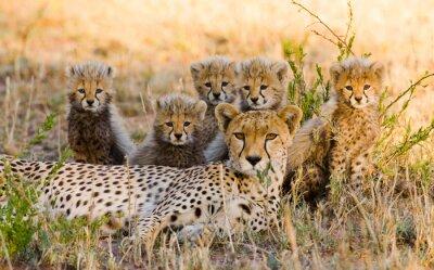 Madre guepardo y sus cachorros en la sabana. Kenia. Tanzania. África. Parque Nacional. Serengeti. Maasai Mara. Una excelente ilustración.