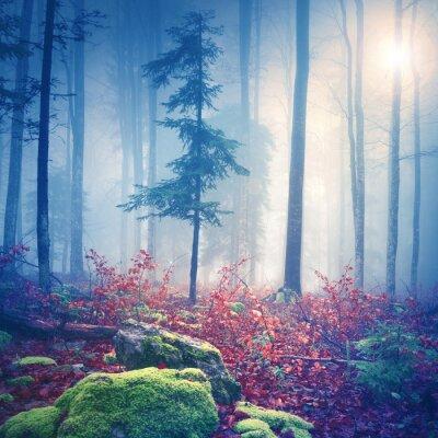 Póster Mágica luz en el bosque de niebla con el sol
