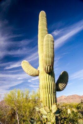 Póster Majestuoso Saguaro Cactus
