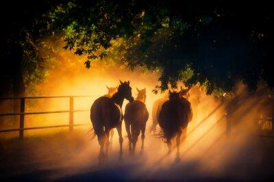 Póster manada de caballos