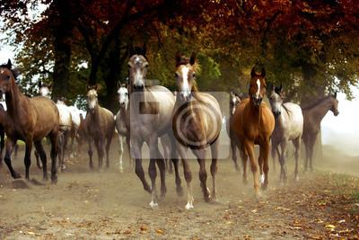 Manada de caballos en la carretera del pueblo