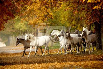 manada de caballos en un camino rural en el otoño