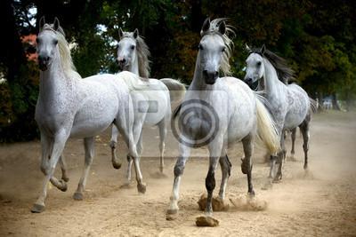 manada de caballos que corren a lo largo de un camino rural