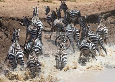 Manada de cebras en el agujero de agua en Kenia