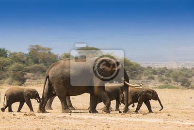Manada de elefantes en el Parque Nacional Amboseli Kenia