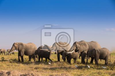 Manada de elefantes en el Parque Nacional de Amboseli Kenia