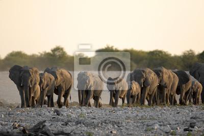 Manada de elefantes va a un agujero de agua.