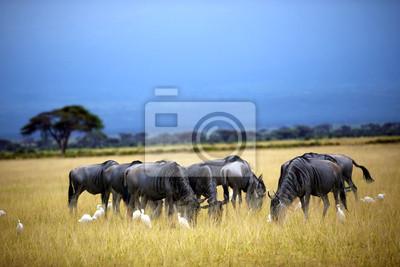 Manada de ñu, ñu en la sabana. Masai Mara en Kenia