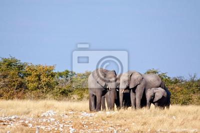 Manada del elefante
