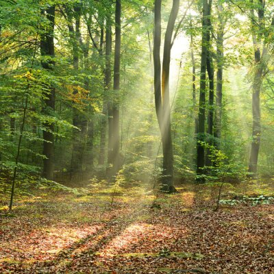 Póster Mañana en el bosque