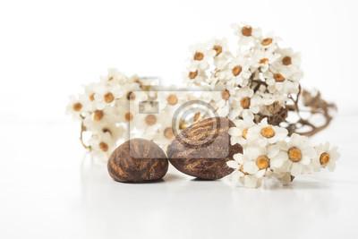 manteca de karité nueces y flores