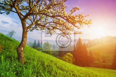 Manzano silvestre en una colina verde
