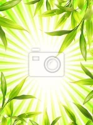 Marco de la planta de bambú sobre fondo abstracto verde