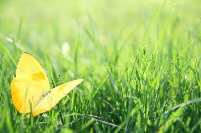 Póster Mariposa amarilla en fondo verde hierba