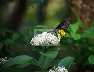 mariposa amarilla en la flor y las hojas del árbol whtie verdes