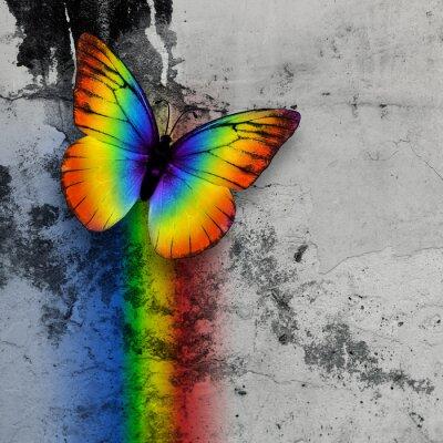 Póster mariposa del arco iris