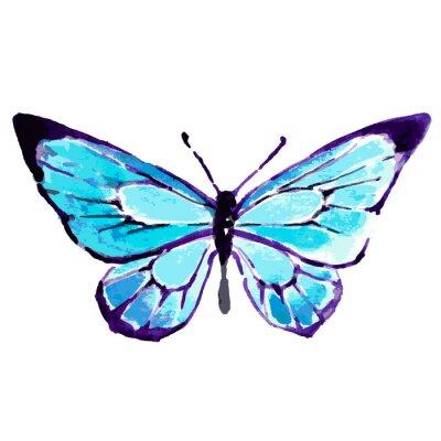 Póster mariposa, diseño de la acuarela
