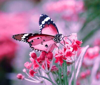 Póster Mariposa en la flor anaranjada