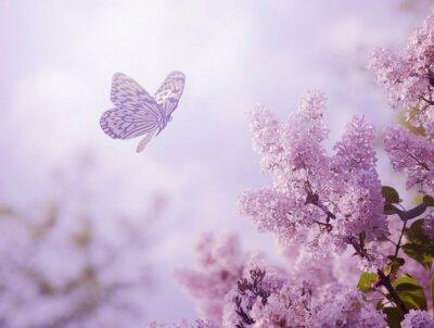 Póster Mariposa y flor
