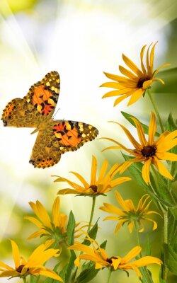 Póster Mariposa y flores en el jardín close-up