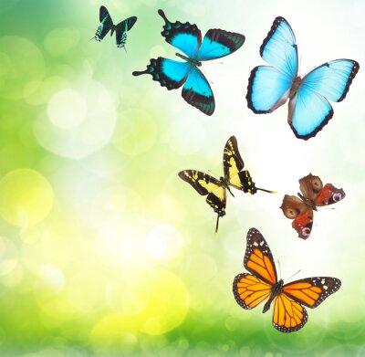Póster Mariposas tropicales en el jardín