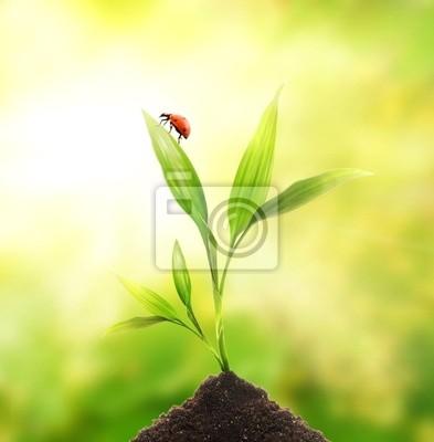 Mariquita sentada en una planta joven