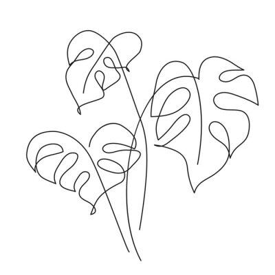 Póster Monstera Tropical leaf
