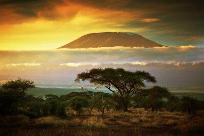 Póster Monte Kilimanjaro. Savanna en Amboseli, Kenia