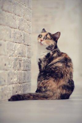 Póster Multicolor gato cerca de una pared de luz de ladrillo