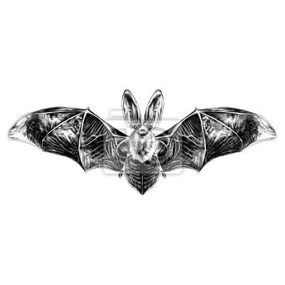 Murciélago Con Alas Abiertas Patrón Simétrico Dibujo Gráficos