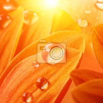 Naranja pétalos de flores con gotas de agua sobre el mismo